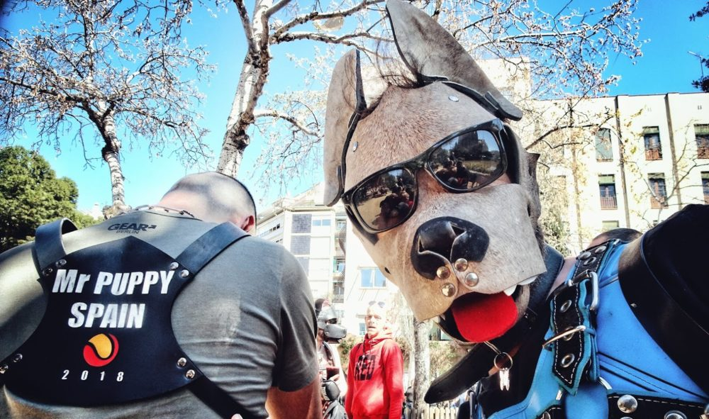 Mr Puppy Spain 2018 (Gallery)